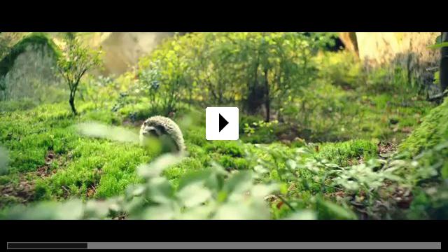 Zum Video: Die kleine Hexe