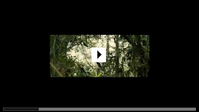 Zum Video: Animals In Love