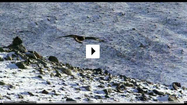 Zum Video: The Eagle Huntress