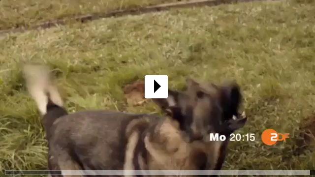 Zum Video: Die Tote in der Berghütte