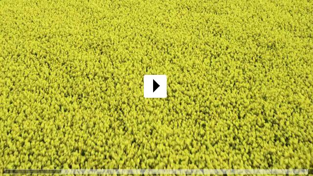 Zum Video: Trakehner - Des Königs letzte Pferde