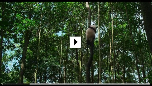 Zum Video: Born in China