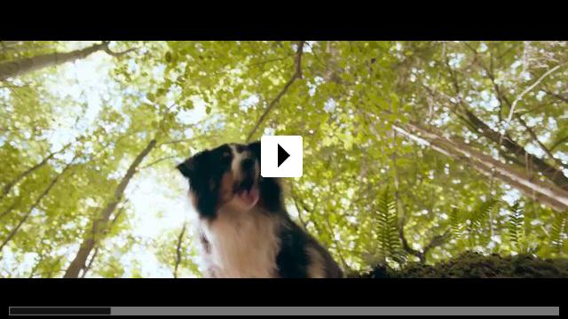 Zum Video: Fünf Freunde und das Tal der Dinosaurier