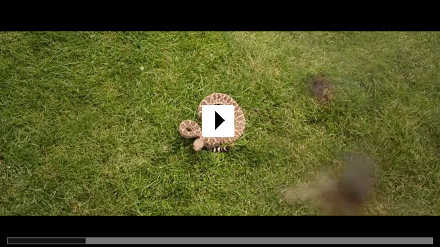 Zum Video: Villa Capri - Das ist erst der Anfang