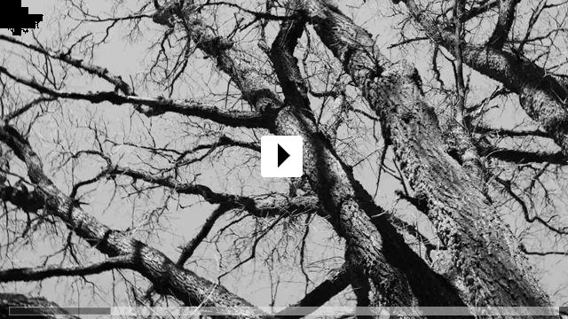 Zum Video: November