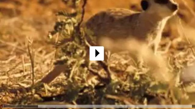 Zum Video: Wächter der Wüste