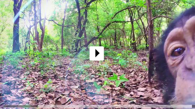 Zum Video: Spione im Tierreich