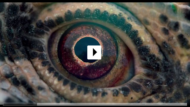 Zum Video: Voyage of Time
