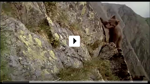 Zum Video: Der Bär