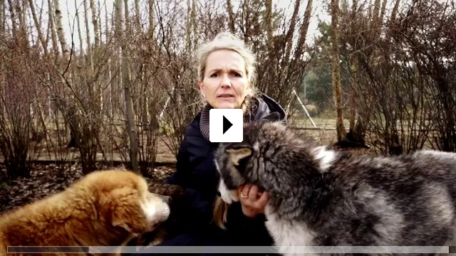 Zum Video: Citizen Animal