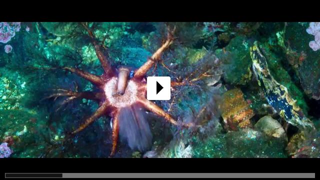 Zum Video: Unser blauer Planet 2