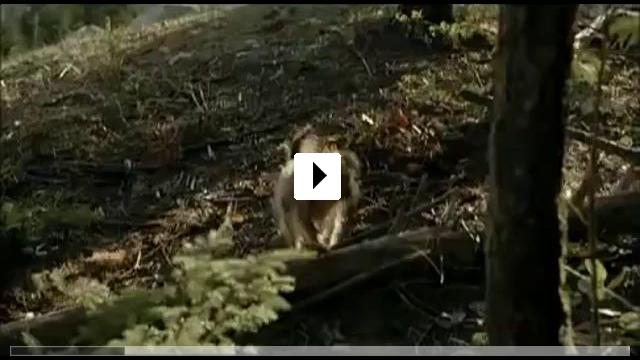 Zum Video: Tin Man