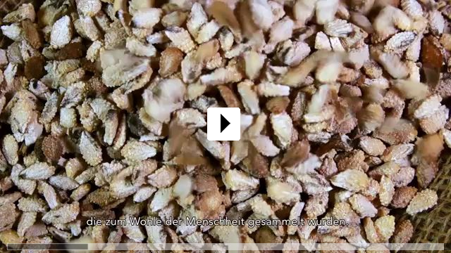 Zum Video: Unser Saatgut - Wir ernten, was wir säen
