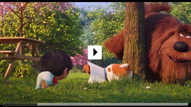 Zum Video: Pets 2