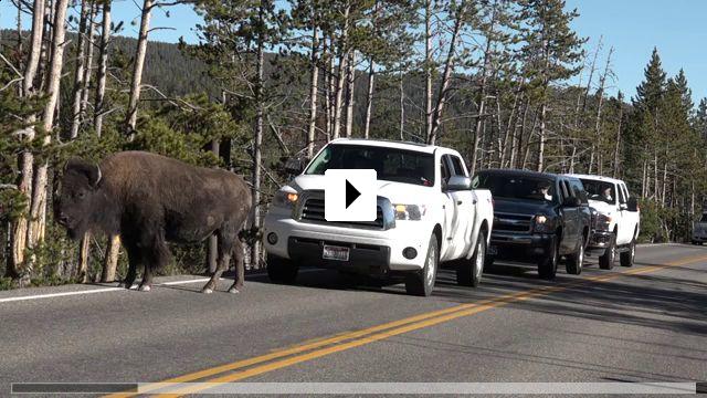 Zum Video: Becoming Animal