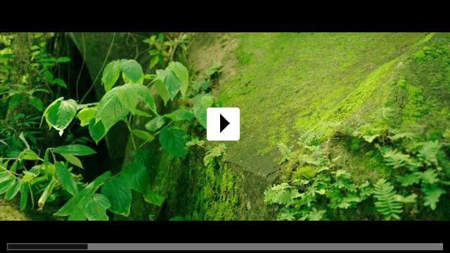 Zum Video: Die Winzlinge - Abenteuer in der Karibik