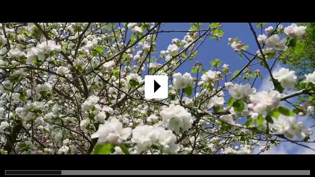 Zum Video: Kirschblüten & Dämonen