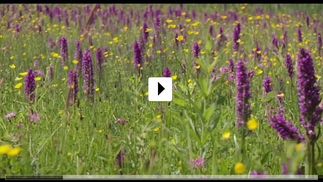 Zum Video: Die Wiese - Ein Paradies nebenan