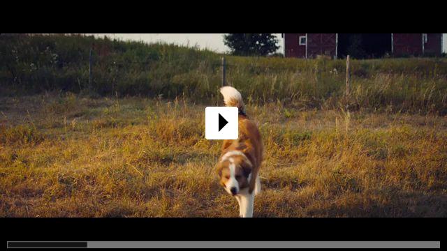 Zum Video: Bailey - Ein Hund kehrt zurück