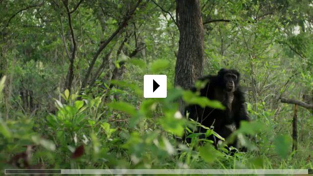 Zum Video: Wilde Dynastien - Die Clans der Tiere