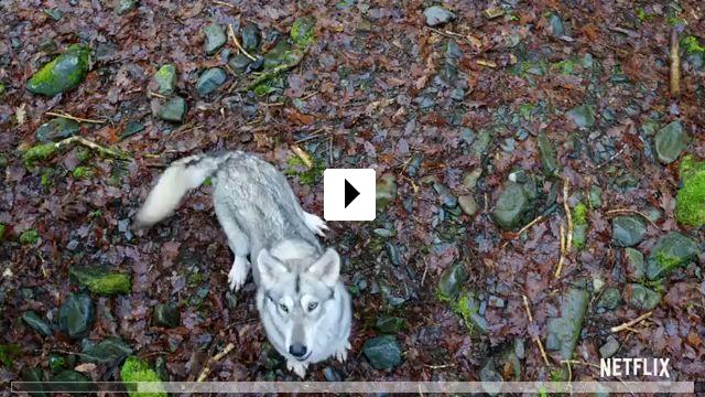 Zum Video: Du gegen die Wildnis
