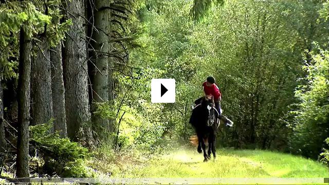 Zum Video: Peter Pfister - Der Pferdemann
