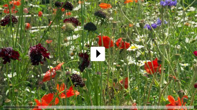 Zum Video: Der Künstlergarten: Der amerikanische Impressionismus