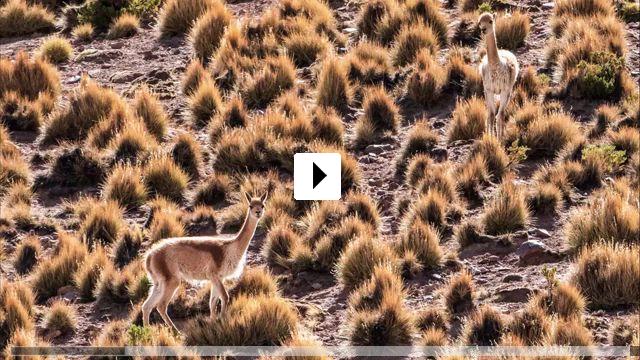 Zum Video: Tierra Colorada - Woanders sein in Bolivien