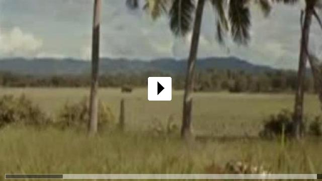 Zum Video: Wonderful Town