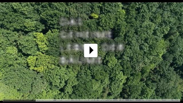 Zum Video: Das geheime Leben der Bäume