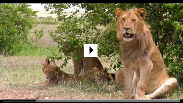 Zum Video: Der Weisse Massai Krieger
