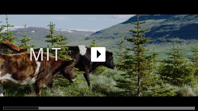 Zum Video: Milchkrieg in Dalsmynni