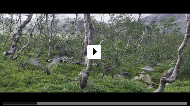 Zum Video: Der Junge und die Wildgänse