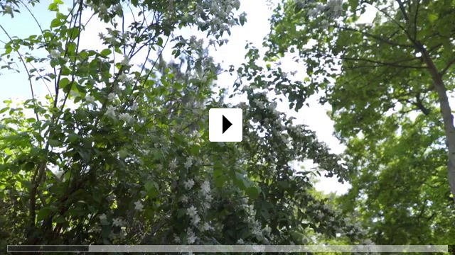 Zum Video: SEIN - gesund, bewusst, lebendig