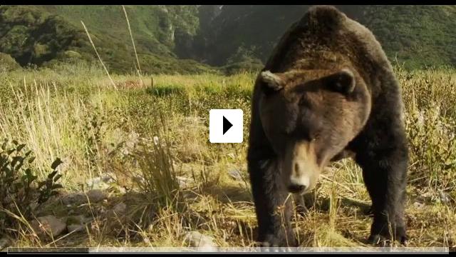 Zum Video: Der Bär in mir