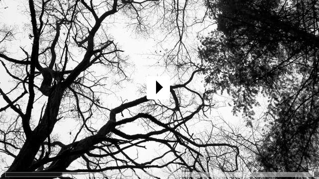 Zum Video: Das Perfekte Schwarz