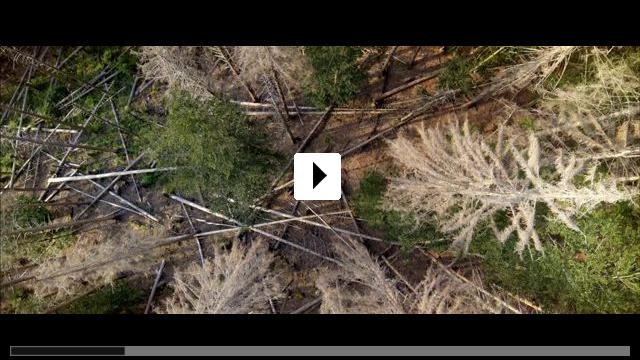 Zum Video: Der wilde Wald