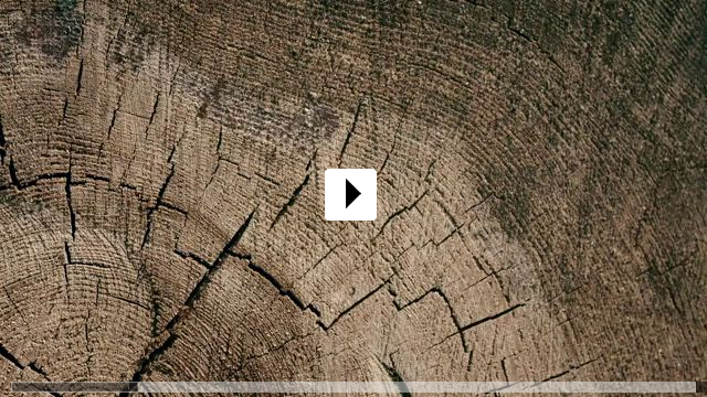 Zum Video: A Symphony of Noise