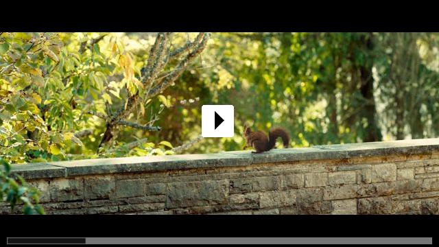 Zum Video: Die Vergesslichkeit der Eichhörnchen