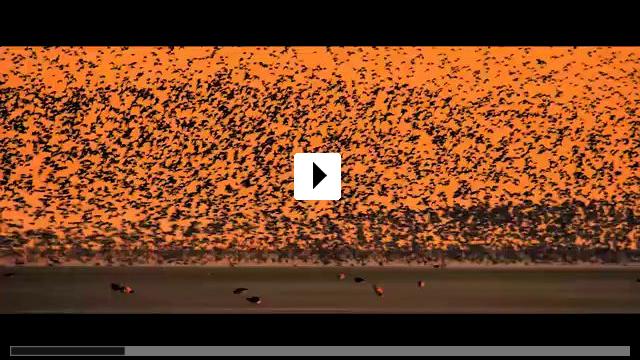 Zum Video: Der Atem des Meeres