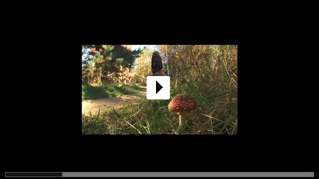 Zum Video: Menschen, Träume, Taten