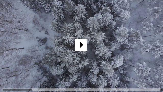 Zum Video: Dem Leben entgegen - Kindertransporte nach Schweden