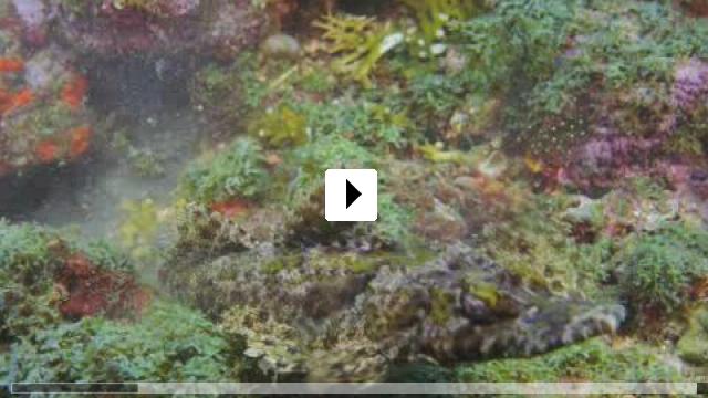 Zum Video: Under the Sea 3D - Paradiese im Meer