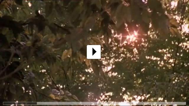 Zum Video: Virgin Suicides