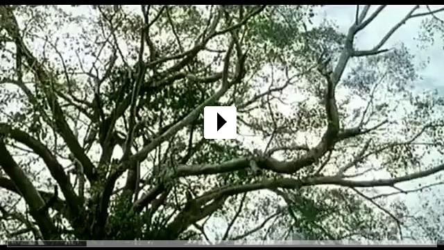Zum Video: Ong-bak
