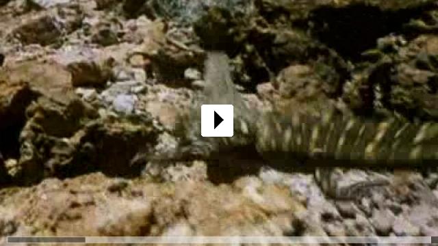 Zum Video: Crocodile Hunter - Auf Crash-Kurs