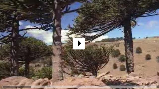Zum Video: Dinosaurier 3D - Giganten Patagoniens