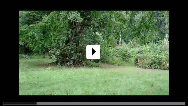 Zum Video: Gespenster