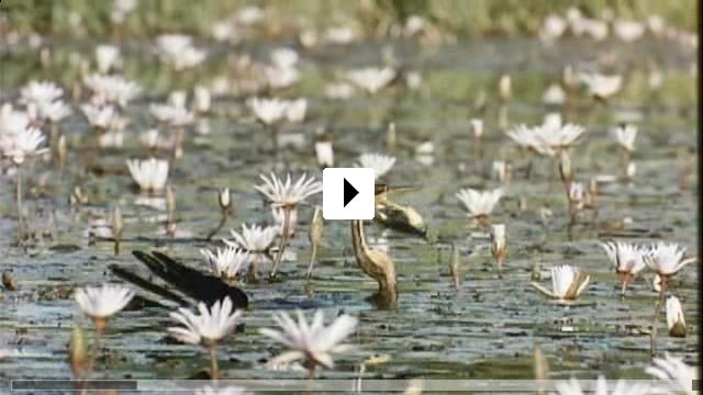 Zum Video: Nomaden der Lüfte - Das Geheimnis der Zugvögel