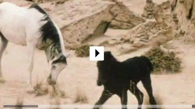 Zum Video: Der schwarze Hengst - Wie alles begann